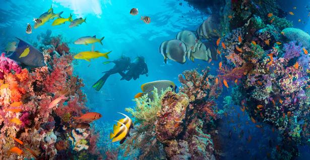 煌く海の水中でカラフルな魚達に囲まれて